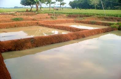 Gambar Kolam tanah