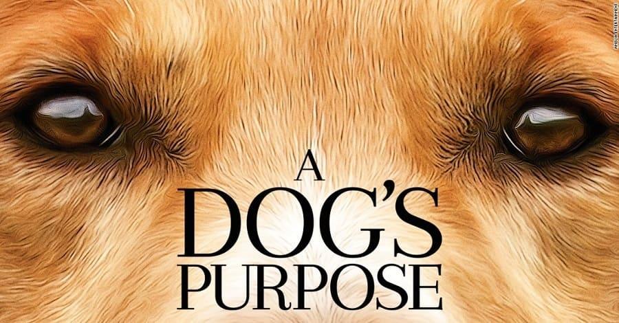 Quatro Vidas de um Cachorro em bluray já pode ser baixado dublado via torrent