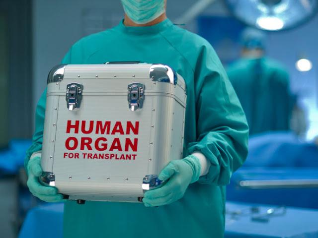 human organs transplant