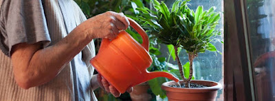 Plantas jardinería benéfico personas