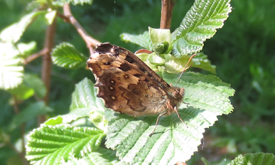 brown-butterfly-canon-ixus-sample-image
