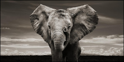 Most viewed Elephant Wallpaper