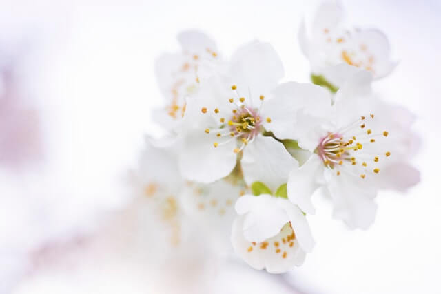 Beautiful Flowers Bloom Blooming Blossom HD Copyright Free Image