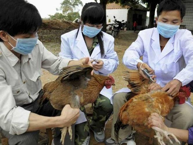 China detectó el primer caso mundial de gripe aviar H10N3 en humanos