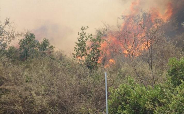 Αλεξανδρούπολη: Έσβησε η δασική πυρκαγιά στο Τριφύλλι