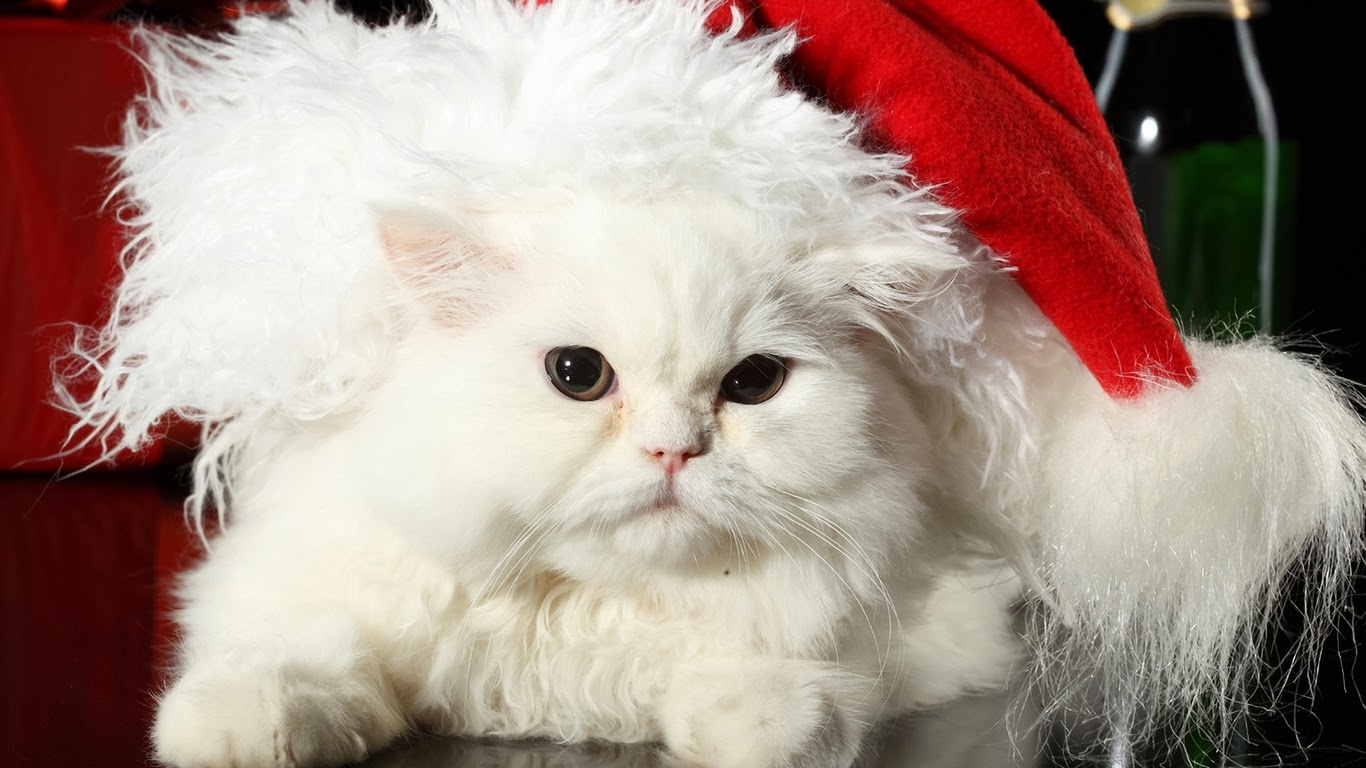 Cute Cat HD Wallpapers Free Download ~ Unique Wallpapers