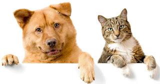 Ilustrasi Kucing dan Anjing (sumber: petbacker.es)