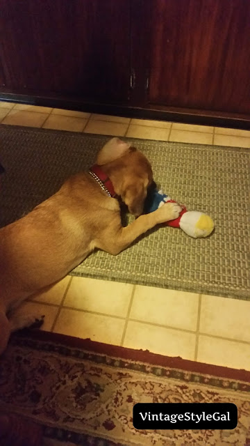 Pup playing with Mr. Bill