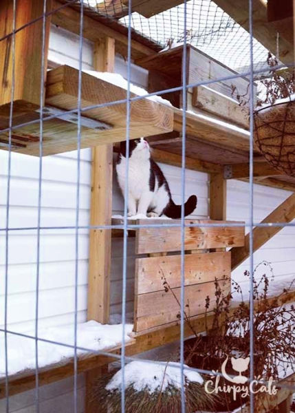 black and white cat in a catio