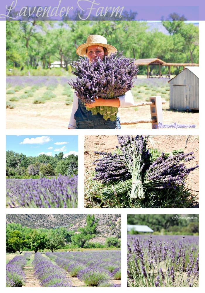 gardening-gardens-lavender-fields-flower-farming-athomewithjemma