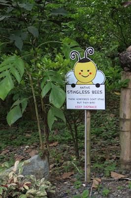 stingless bees manila