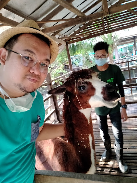 Gambar blogger bersama alpaca di farm in the city petting zoo