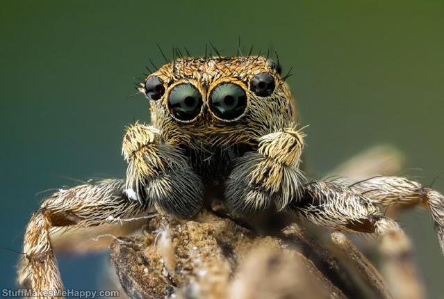 Spider. Eyes to eyes
