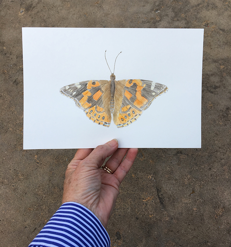 Watercolor painting of painted lady butterfly by Kathleen Maunder
