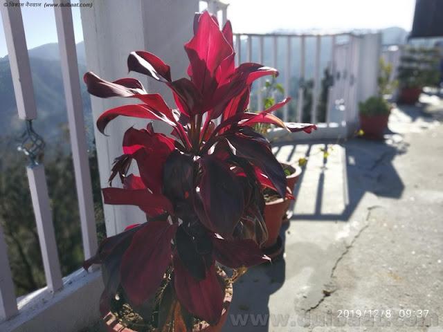 छत पर मौजूद पौधे महाराज
