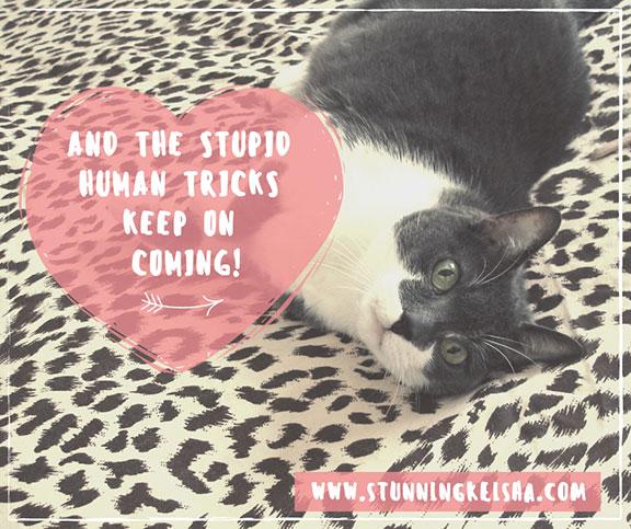 And the Stupid Human Tricks Keep on Coming!