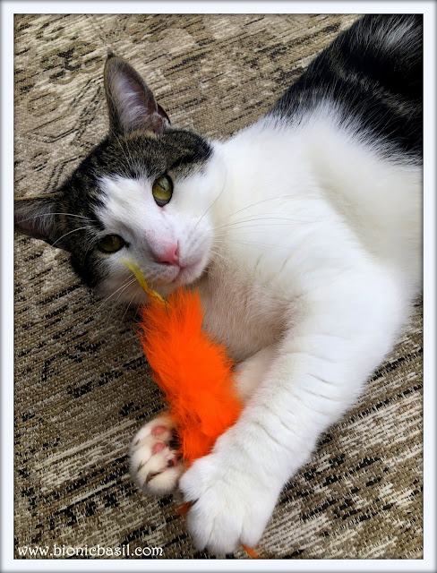 Melvyn and The Furry Carrot @BionicBasil®