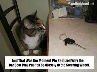Catladyland Cats Are Funny September 2012