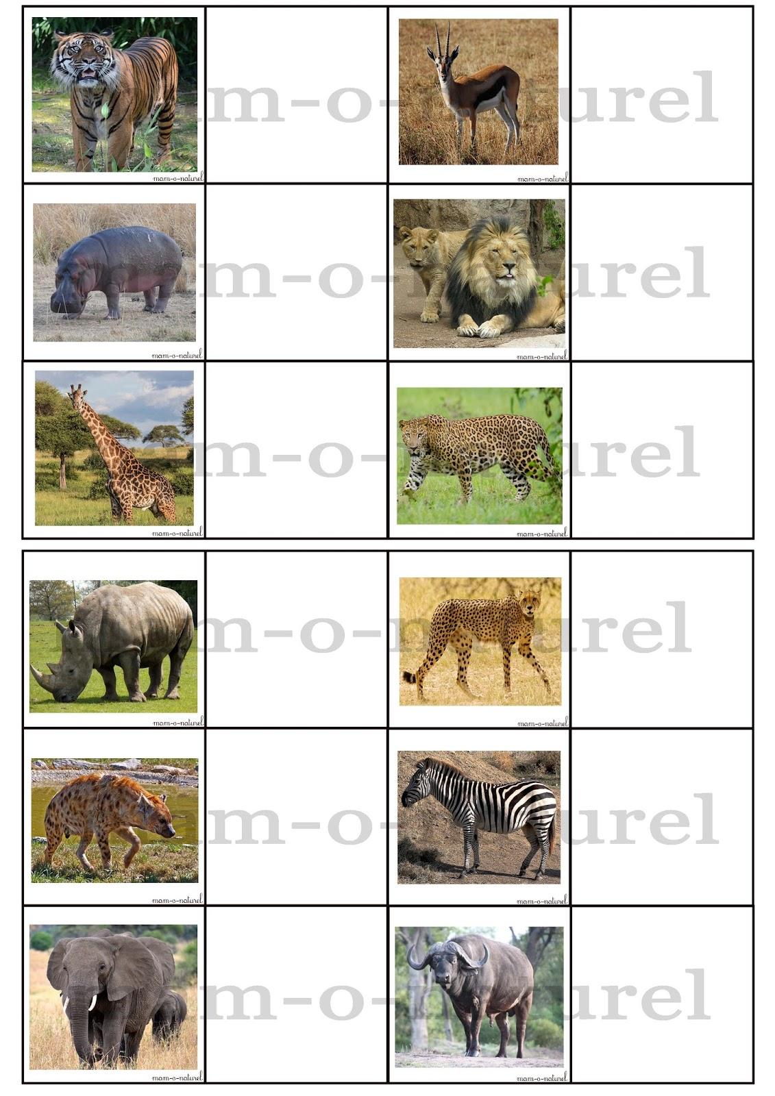 Loto des animaux de la savane mam 39 o naturel - Felin de la savane ...