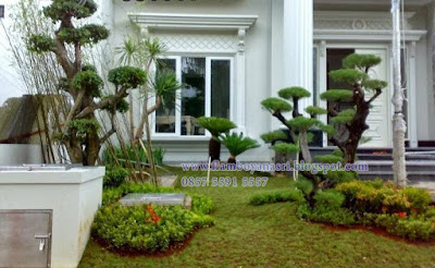 Tukang Taman Surabaya Pohon anting Putri
