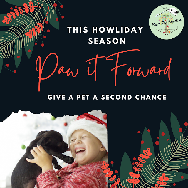 OSPCA Christmas campaigns a success for pets & community