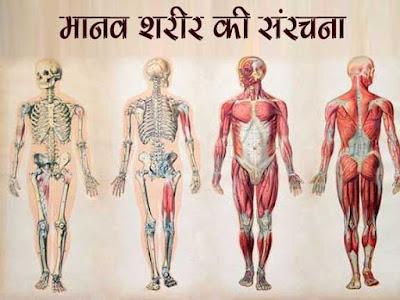 Human Body General Knowledge