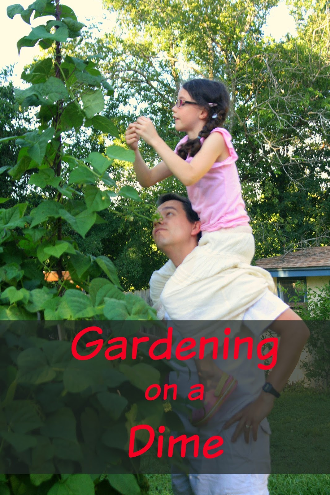 Having fun at home 3 tips to help you save money gardening - Money saving tips in gardening ...