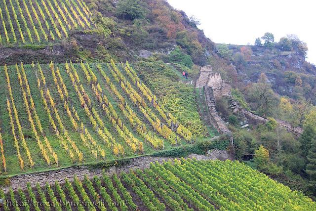 Mosel wine vineyards, Rhine valley