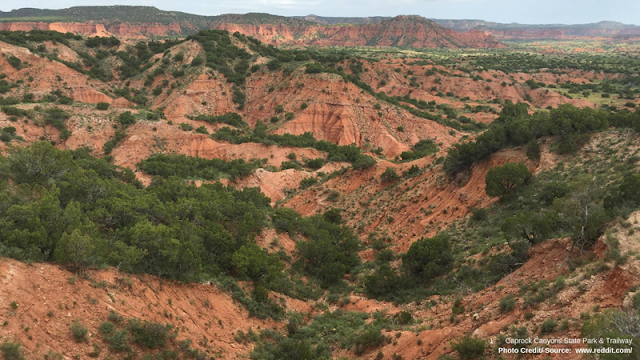 green foliage on red rock landscape