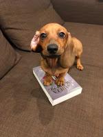 Wziął i wlazł na książkę... sam. To znak! fot. paratexterka ©