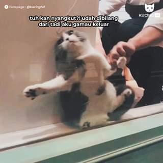 cerita meme kucing ngambek 5