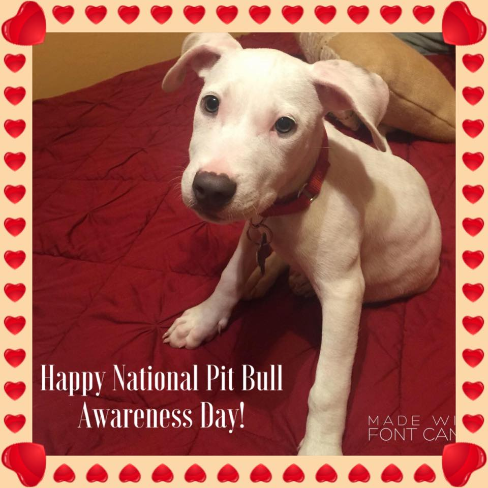 National Pit Bull Awareness Day Wishes Beautiful Image