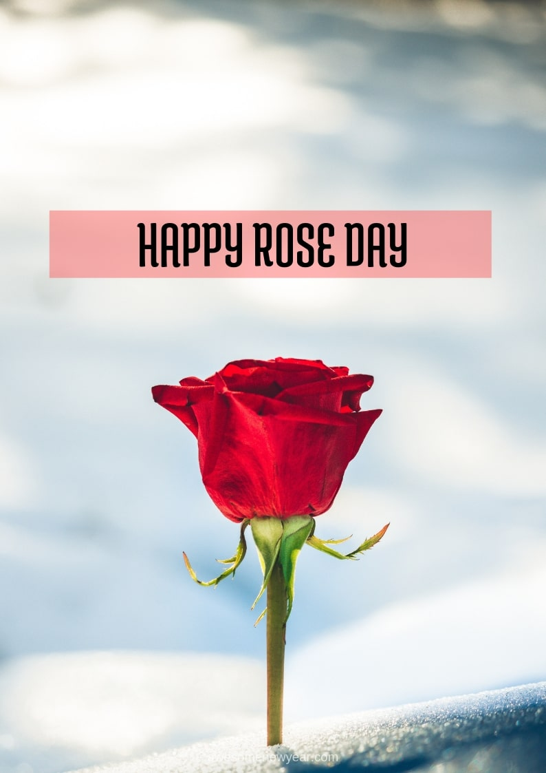 Latest Happy Rose Day Wishes Images Quotes Pic Sms Gif For