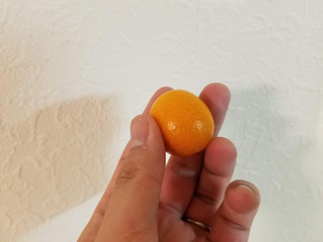 薩摩川内の松田農場で作られた金柑を手に持っているところ