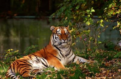 tigre-libros-lista
