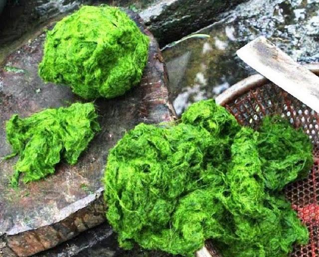 Moss of the Ma River – a unique dish in Son La 1