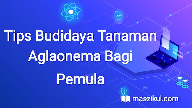 Tips Budidaya Tanaman Aglaonema Bagi Pemula