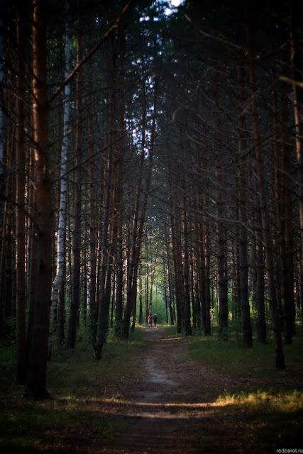 Тропа в лесу недалеко от р. Кеза