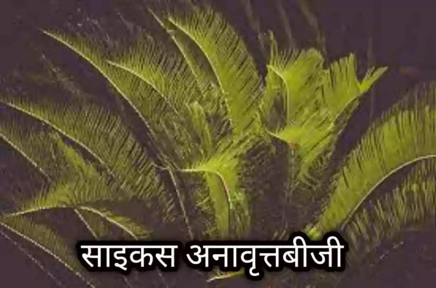 अनावृतबीजी पौधों के प्रमुख लक्षण
