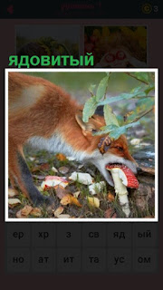 в лесу лиса хочет съесть ядовитый гриб мухомор