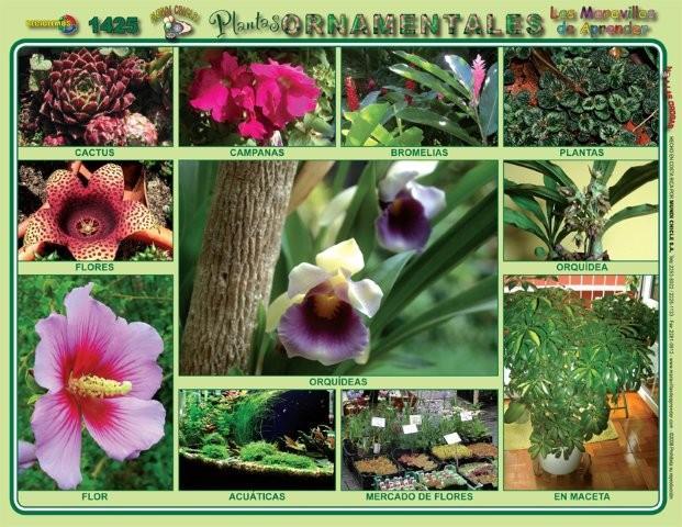 Plantas tipos de plantas ornamentales for Plantas ornamentales para colorear