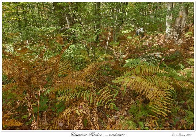 Wachusett Meadow: ... wonderland...