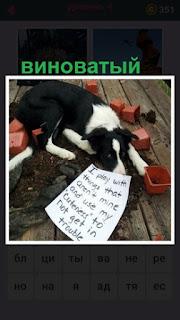 на полу лежит с виноватым видом собака и рядом листок бумаги с надписями