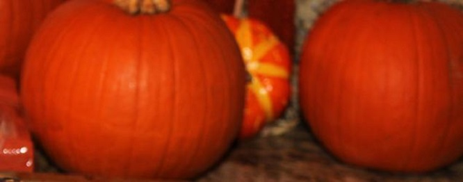 these are two sugar pie pumpkins in a photo with gourds in the background