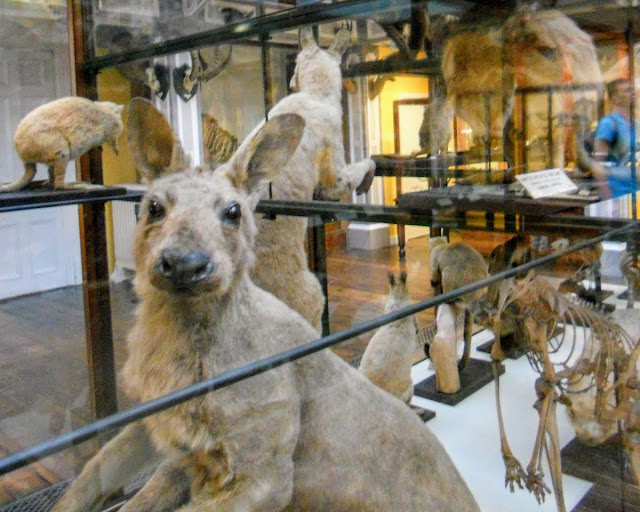 Best Free Things to do in Dublin: Natural History Museum Dead Zoo