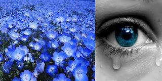 Povestire de Octavio Paz: Buchetul albastru