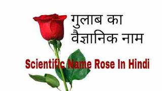 गुलाब का वैज्ञानिक नाम | Scientific Name Rose In Hindi
