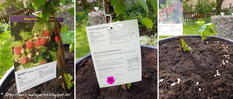 Mein Waldgarten: Pflanzkübel, Halbreifer Kompost Und Ein