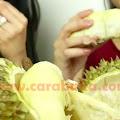 10 Rahasia Cara Memilih Durian Matang, Manis, Enak Dan Berdaging Tebal!