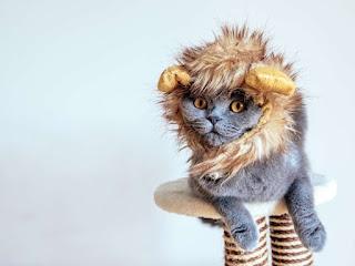 Tu gato odia no tan secretamente cuando lo vistes